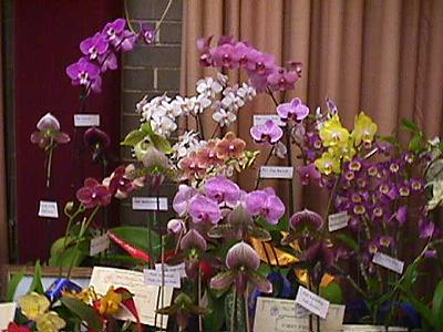 A recent Robertson Orchid Display